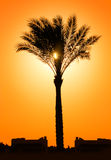 Silhouette of palm tree against sun Royalty Free Stock Photography