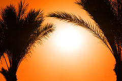 Silhouette of palm tree against sun Royalty Free Stock Photo