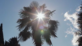 Silhouette of Palm Tree Against Sun. HD stock footage