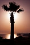 Silhouette of palm tree against sunset. At sea Royalty Free Stock Image