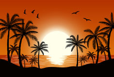 Silhouette palm tree on beach. Under sunset sky background. Vector illustration Royalty Free Stock Photography