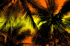 Silhouette palm tree. Stock Photo
