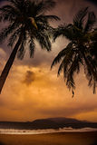 Silhouette of palm tree at beautiful tropical sunset Royalty Free Stock Photo