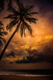 Silhouette of palm tree at beautiful tropical sunset Stock Photos