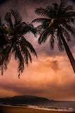 Silhouette of palm tree at beautiful tropical sunset Royalty Free Stock Image