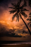 Silhouette of palm tree at beautiful tropical sunset Stock Image