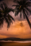 Silhouette of palm tree at beautiful tropical sunset Royalty Free Stock Photos