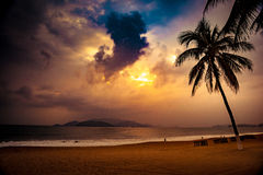Silhouette of palm tree at beautiful tropical sunset Stock Images