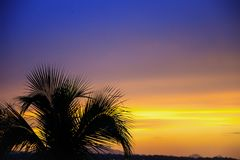 Silhouette of a palm tree in front of an orange and purple sunse stock photography