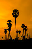 Silhouette of Palm tree. Royalty Free Stock Photo