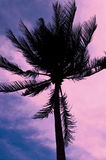 Silhouette of palm tree on multi-colored sky Royalty Free Stock Image