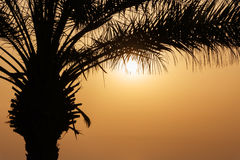 Silhouette of palm tree Royalty Free Stock Images