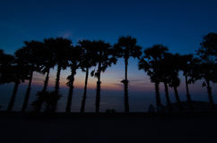 Silhouette of Palm Tree Royalty Free Stock Photography