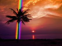 Silhouette palm tree rainbow in back sunset sky in the sea Stock Images