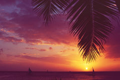 Silhouette palm tree sailboats sunset faded filter Royalty Free Stock Images