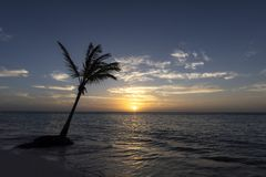 Solitary palm tree on beach in the Caribbean at sunrise. stock photo