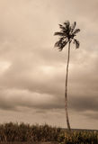 Silhouette of a palm tree standing alone against cloudy horizon Stock Photos