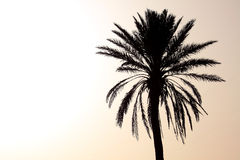 Silhouette of Palm Tree at Sunset Stock Photos