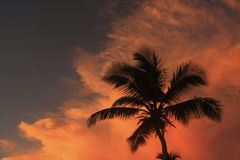 Silhouette of palm tree Royalty Free Stock Photo
