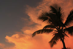 Silhouette of palm tree Stock Images