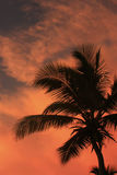 Silhouette of palm tree Stock Image