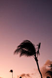 Silhouette of palm tree Stock Photo