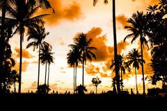 Silhouette palm tree Stock Photo