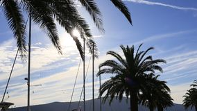 Silhouette of a palm tree at sunset. Montenegrin sunsets on sea. Silhouette of a palm tree at sunset. Montenegrin sunsets stock video