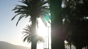 Silhouette of a palm tree at sunset. Montenegrin sunsets on sea. Silhouette of a palm tree at sunset. Montenegrin sunsets stock video footage
