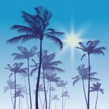 Silhouette of palm tree and sunset sky. Vector illustration Royalty Free Stock Photo