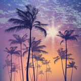 Silhouette of palm tree and sunset sky. Vector illustration Royalty Free Stock Photos