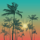Silhouette of palm tree on sunset sky. Vector illustration Royalty Free Stock Images