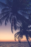 Silhouette palm tree Stock Photos