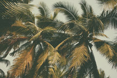 Silhouette palm tree in vintage filter background Stock Photography