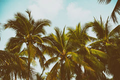 Silhouette palm tree in vintage filter background Stock Photo