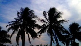 Silhouette of palm tree with windy at dusk,handheld video stock video footage
