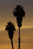 Silhouette of palm trees Royalty Free Stock Image
