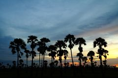 Silhouette of palm trees. Palm trees sunset golden blue sky backlight in Thailand Royalty Free Stock Photography