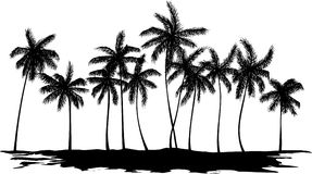 Silhouette of palm trees stock photo