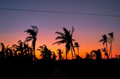 Silhouette of palm trees against a beautiful sunset over Cebu, Philippines Royalty Free Stock Photo