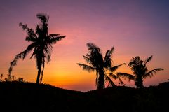 Silhouette of palm trees against a beautiful sunset over Cebu, Philippines. Palm trees against a beautiful sunset over Cebu, Philippines Royalty Free Stock Images