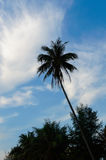 Silhouette of palm trees against the blue sky with clouds Royalty Free Stock Images