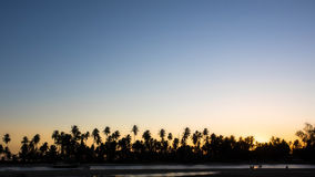 Silhouette of Palm Trees Against Clear Sunset Sky Stock Photography