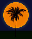 Silhouette of palm trees against the sun. Evening landscape. silhouette of palm trees against the sun in the dark blue sky Royalty Free Stock Images