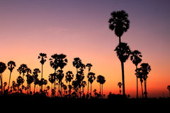 Silhouette Palm Trees At Sunset Royalty Free Stock Images