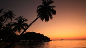 Silhouette of palm trees on the background of of romantic sunset. Koh Chang. Thailand stock footage