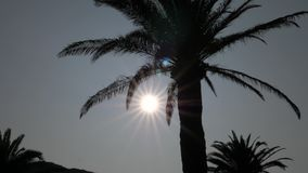 Silhouette Of Palm Trees On A Background Of The Sun With Rays. 4K stock video footage