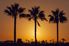 Silhouette Palm Trees on Beach Against Sky Stock Photos