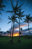 Silhouette Palm Trees on Beach during Sunset Stock Images