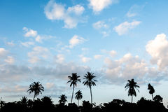 Silhouette of palm trees in beautiful blue sky. Silhouette of palm trees in beautiful blue sky and white fluffy clouds Stock Photos